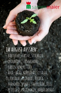 August-Aussaat