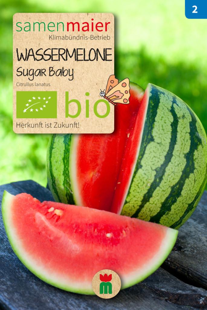 Organic Watermelon Sugar Baby | Samen Maier