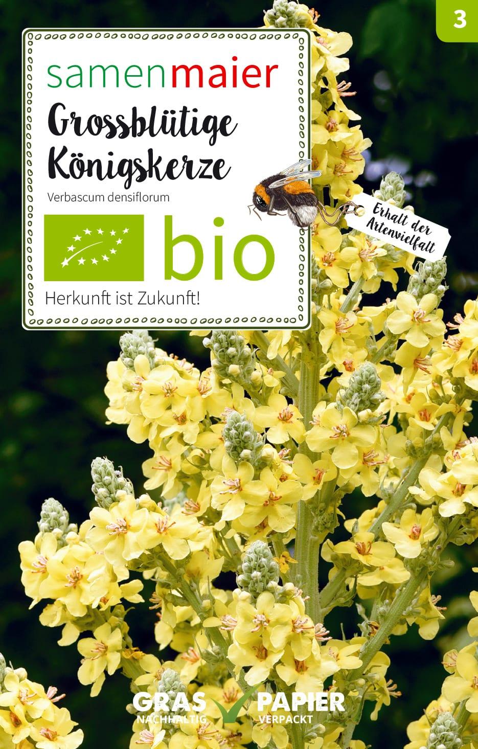 ** Die schönen gelben Blüten werden gerne von Insekten besucht Königskerze !