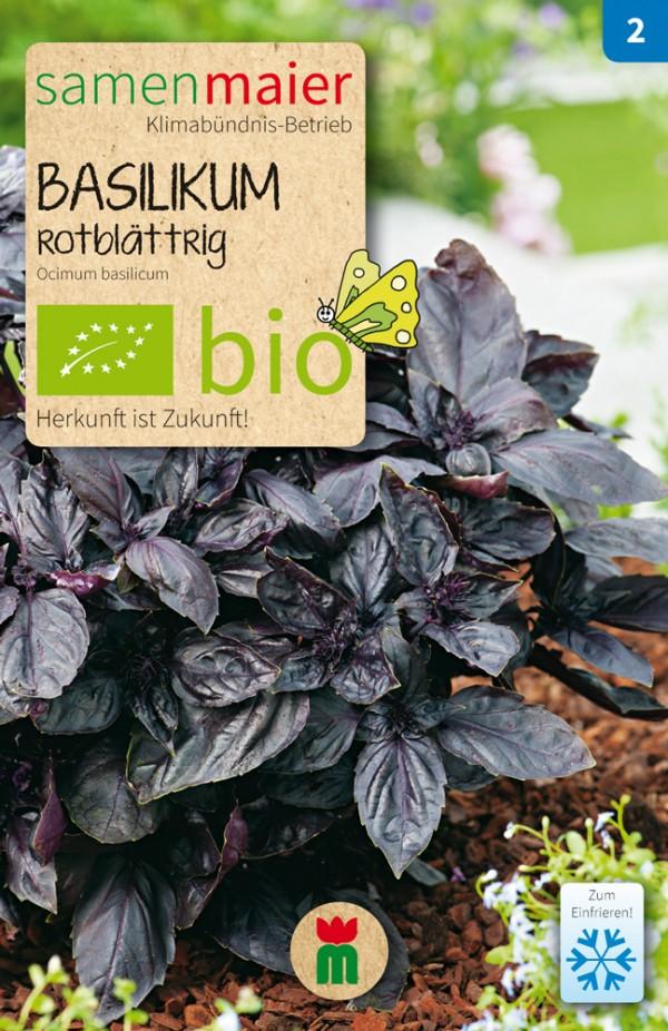 Basilikum-rotblättrig
