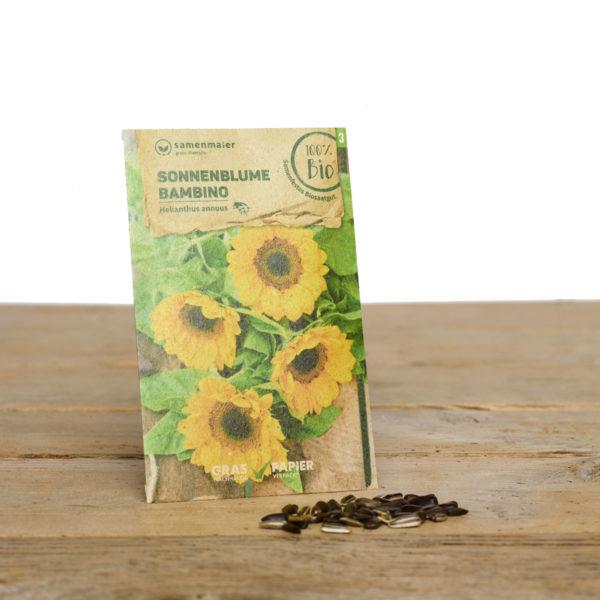 Bio Saatgut Sonnenblume Bambino von Samen Maier