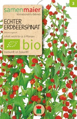 BIO Echter Erdbeerspinat - Blitum virgatum