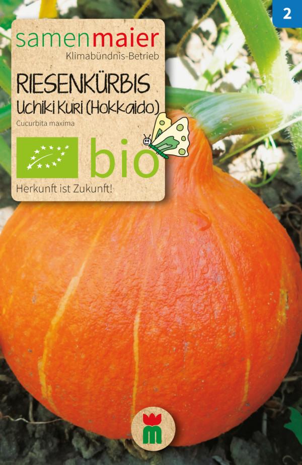 BIO Riesenkürbis Uchiki Kuri Hokkaido - Cucurbita maxima