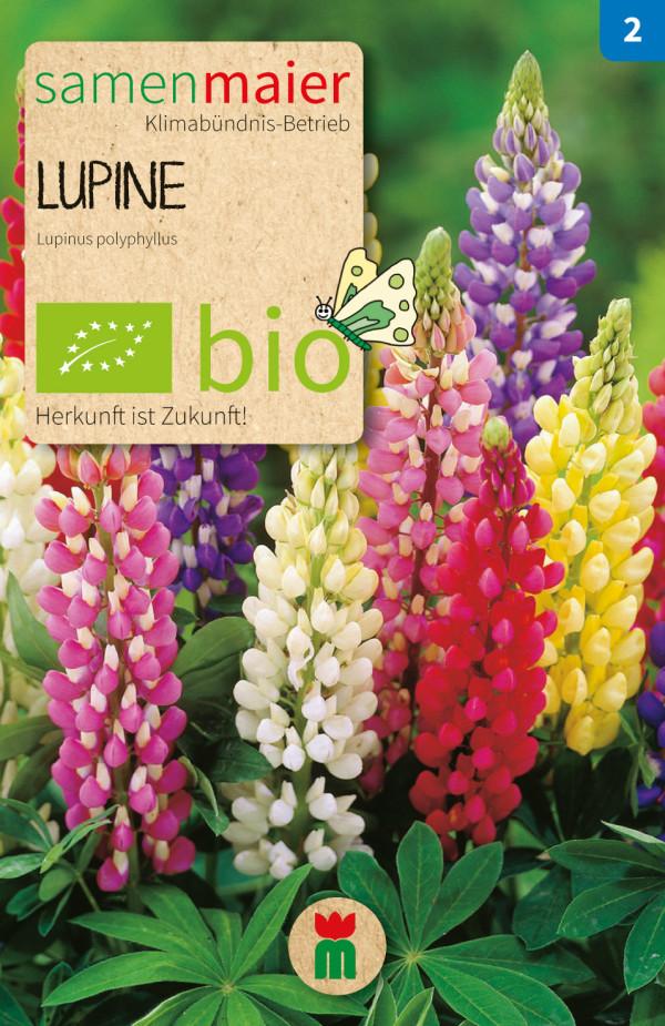 BIO Lupine - Lupinus polyphyllus