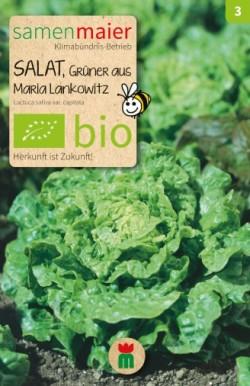 BIO Salat Grüner aus Maria Lankowitz - Lactuca sativa var. capitata
