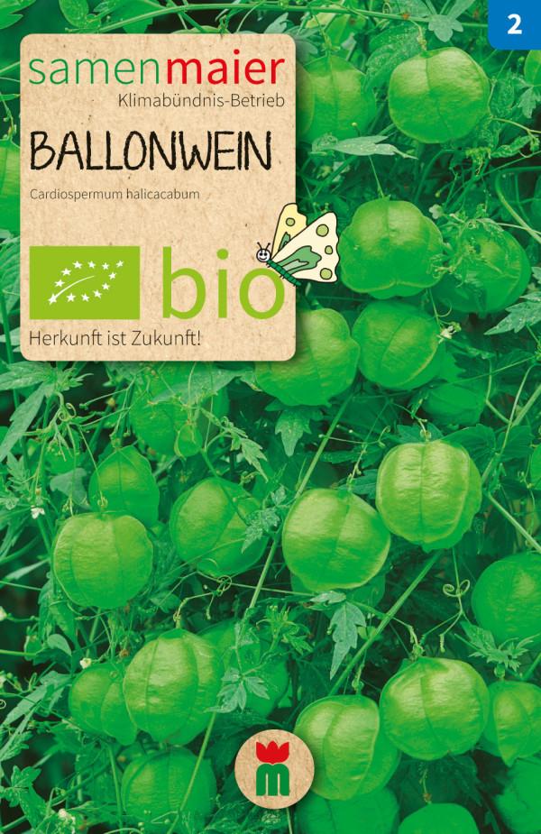 BIO Ballonwein - Cardiospermum halicacabum