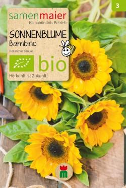 sm-bio-sonnenblume-bambino