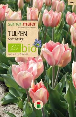 Tulpen-Soft-Design
