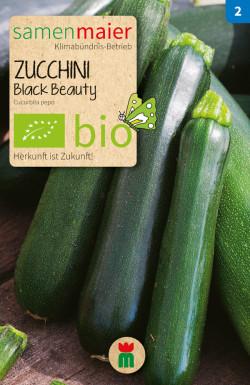 Zucchini-Black-Beauty